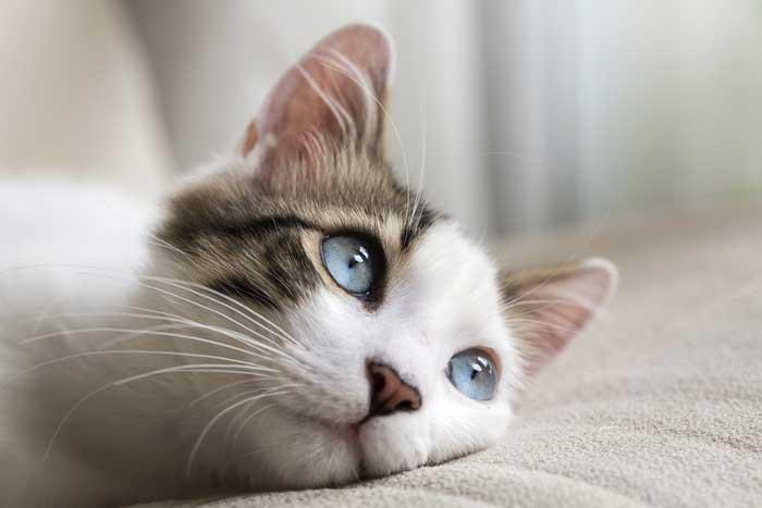 もしも愛犬、愛猫が病気になったら……そんな時のペット保険!選ぶポイントが知りたい!