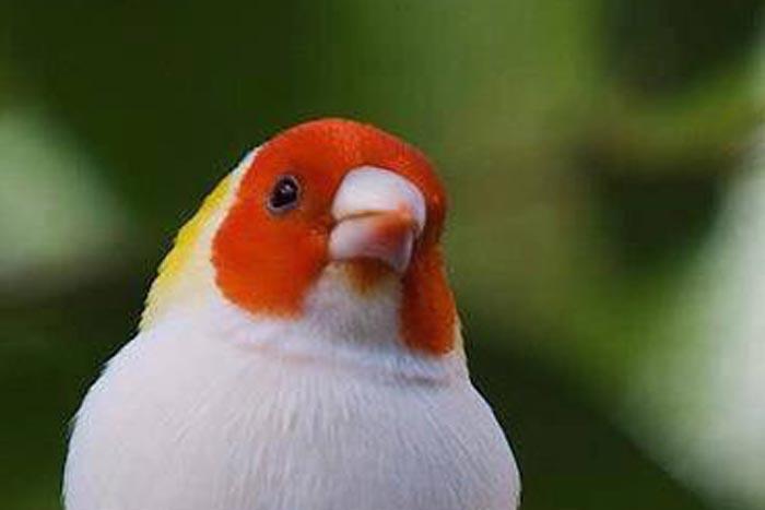 """この鳥のせいで""""ビールを飲みたくなるお父さん""""が続出!(鳥の名前も判明)"""