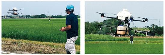 出典:農林水産省