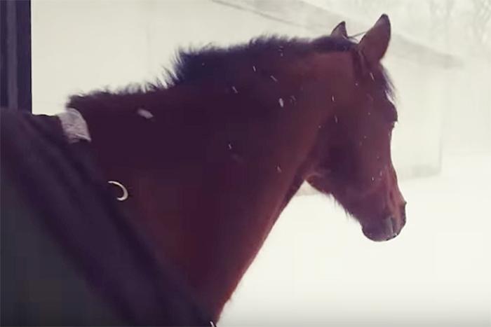 「よっしゃ放牧や!」猛吹雪に元気よく飛び込んだお馬さんの反応が面白いw