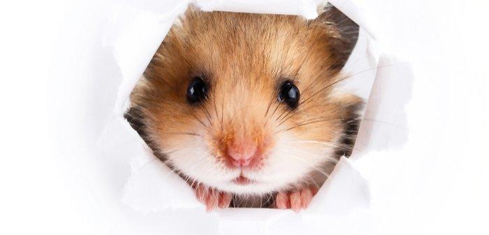 ratto0