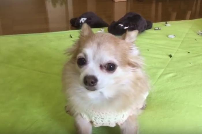 イタズラしたのは誰なのか。容疑者は5匹の犬たち…あなたの推理は?