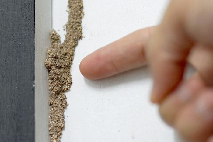 乾燥を嫌うシロアリは、地中から餌場への経路に「蟻道」を作る習性がある。これが確認できたら「シロアリ」がいることになる