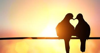 パートナーがいる人生といない人生、ライフワークや仕事はどっちがうまくいく?=本田健
