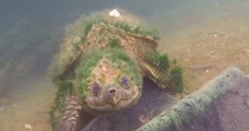 190131.turtle_eye