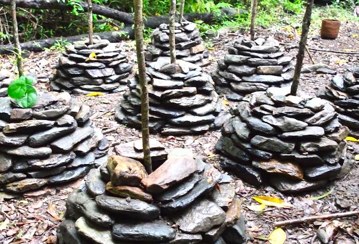 自然を生き抜く。原始生活で外敵から「ヤムイモ畑」を守るため方法とは?
