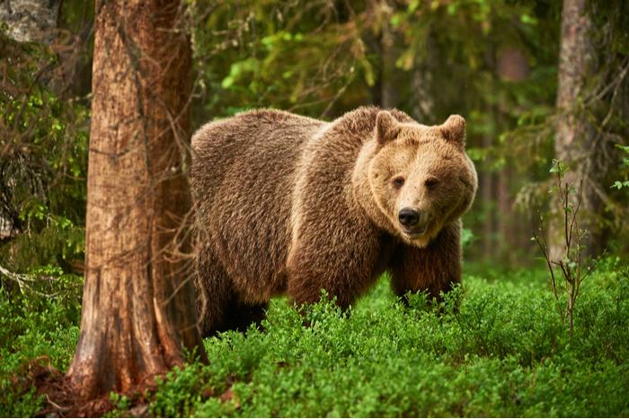 予防利下げへけん制?ジャクソンホールで「熊に餌を与えるな」という強烈発言の真意=久保田博幸