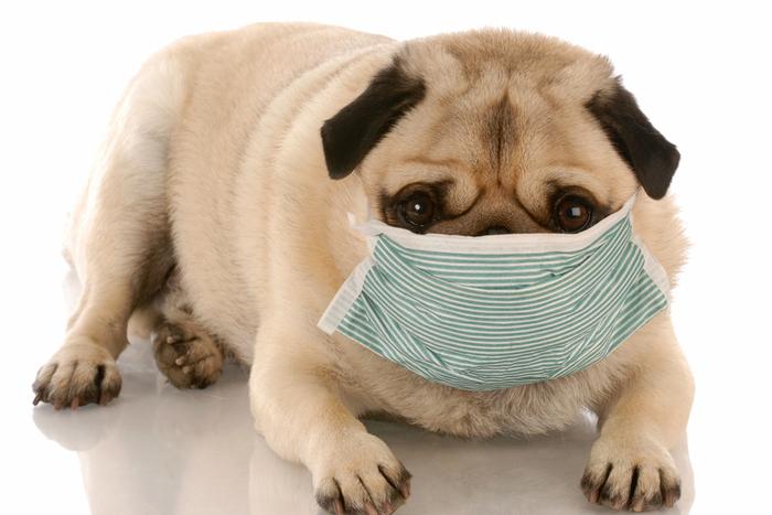 ペットを捨てないで。新型コロナ、ヒトから動物への感染確認も、恐れなくていい理由