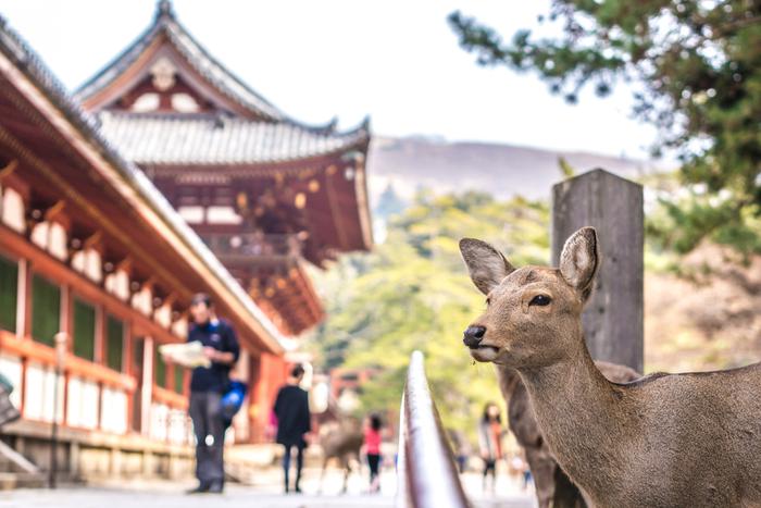 奈良には住んでない説も。GoToイート一転中止を「事務的なミス」とすっとぼけの荒井知事に、県民は「奈良の恥」と大嘆き