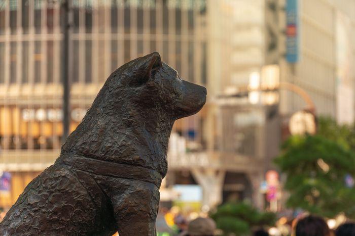 """渋谷区の高齢者""""スマホ無料配布""""に賛否。情報格差解消が目的も端末は2年前のサムスン製。個人情報漏洩後も続く行政「LINE偏重」を危惧する声も"""