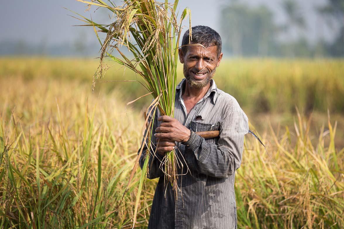 稲を収穫する男 (C) Masashi Mitsui