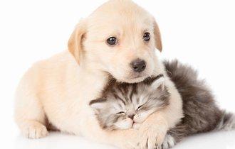 ねこ好きが断言「犬派はねこの良さを全然わかっていない」