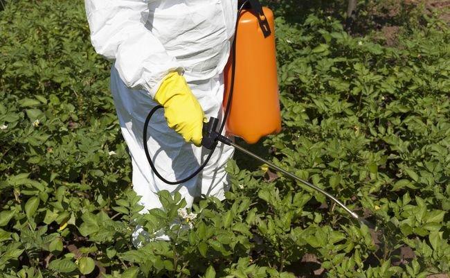 日本の野菜が危険食品に。EUが使用禁止した農薬を大幅に規制緩和する暴挙