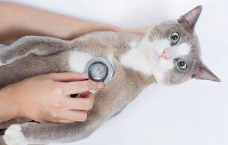 あるある? 飼い猫の診察でついついキュンとしたこと