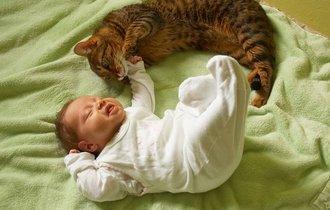 【しんコロ】生まれてきた子が動物アレルギーだったらどうする?