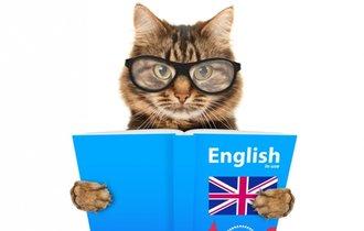 ワシントン大学院卒「しゃべるねこを飼う男」が教える英語上達の最短ルート