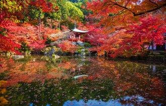 私の秋は忙しくなる。「そうだ京都、行こう」歴代ロケ地で紅葉狩り
