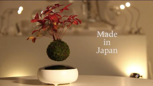 浮いてますよ。日本人が制作した謎の「空中盆栽」に世界が二度見