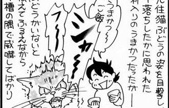 【マンガ】2匹目の猫が来た!心を開かない子猫に漫画家一家の面々は