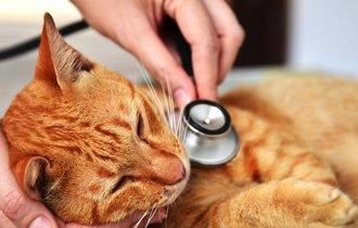 愛猫の「抗ガン剤」治療に悩む飼い主。猫好き医学博士からの回答は?