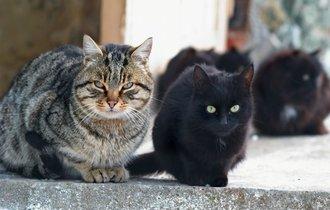 野良猫への餌やり、やめました。でも行く末が心配…助けてください!