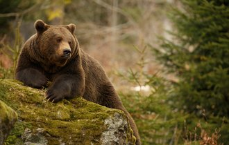 なぜ「熊」という字の下に「4つの点」があるか知っていますか?