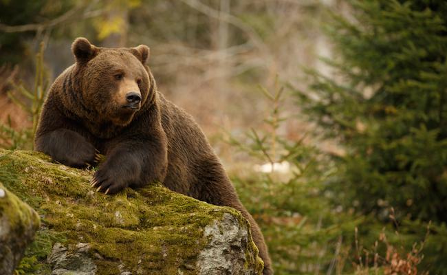 なぜ「熊」という字の下に「4つ...