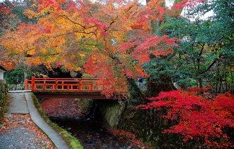 【京都案内】今年も古都に秋が来た。紅に染まる大原の里を往く
