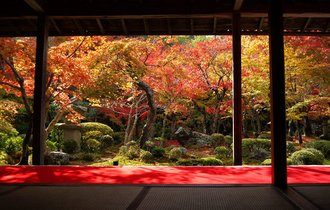 【京都】境内に広がる敷き紅葉を独り占め。哲学の道で思索に耽る