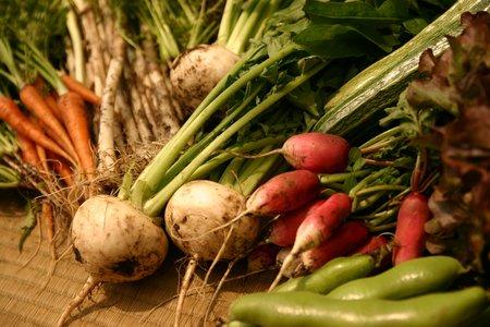 3キャプション 約60品目の野菜を無農薬で育てている。(イメージ)砂つき いろいろ 5月-2