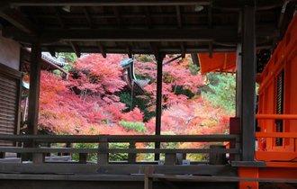 【京都】紅葉を踏みしめて歩く洛南・山科。冬はもうすぐそこに