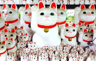 幸せも招く。豪徳寺に残る「招き猫」と井伊家の深い繋がり