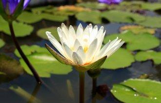 「お釈迦になる」「お陀仏」。意外と多い、仏教にまつわる日本語