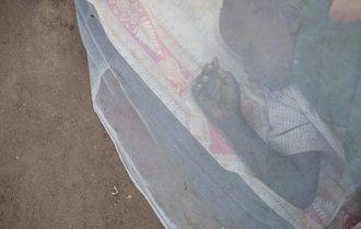 日本の「蚊帳」が世界を救った。米国の横ヤリにもめげぬ日本企業