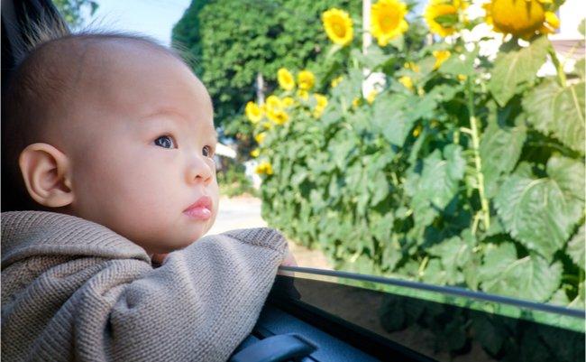 20170823_babysunflower