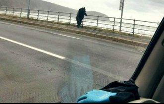 【驚き】北海道で、橋の上でたそがれているヒグマが目撃される
