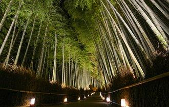 京都の冬を愉しめてこそ大人。夜の古都が光に浮かぶ嵐山花灯路へ