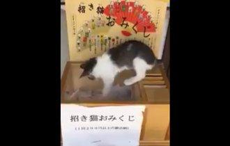 招き猫おみくじに手を出すネコ。くじをひくと思いきや…キュン死
