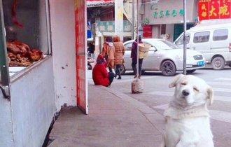 中国のローストチキン屋に「ズルい顔の犬」がいて素通りできない