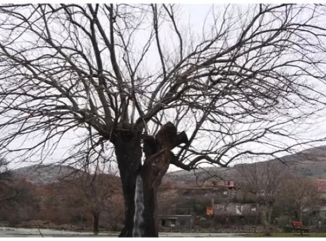 から が 出る 水 動画 木 みかんの木の育て方・みかんの枝を剪定する時の注意点|隔年結果