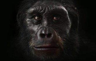 【動画】600万年の人類の進化を2分にまとめた映像がスゴい!