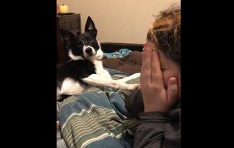 【動画】泣き真似をすると全力で慰めてくれる犬が優しすぎて泣ける