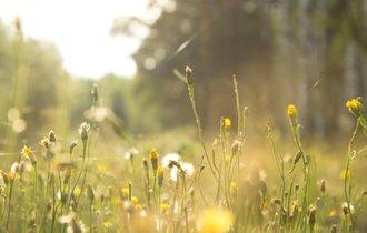 日本人が忘れかけている、雑草が山と命を支えているという事実