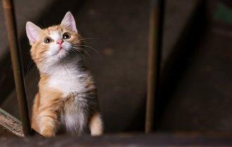 大阪地震で猫の脱走が続出。科学者が教える逃げたペットの探し方