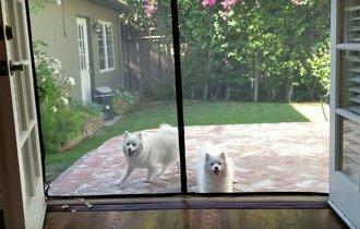 【動画】家に入れないと思っている2匹の犬が可愛すぎる!