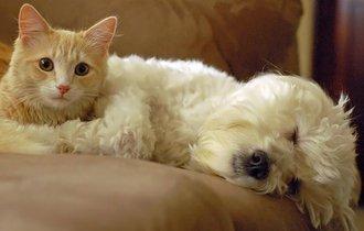 毛だらけの犬猫は熱中症に?獣医に聞く猛暑からペットを守る方法
