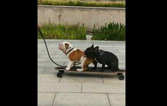 【動画】スケボーで走る犬2匹。1匹が降りた直後にハプニングが!