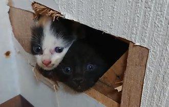 【動画】家より猫の命。壁を破って救出した子猫のキュートな反応