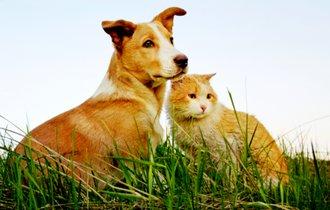 獣医師に聞く、災害からペットを守るため準備したい防災グッズ9選