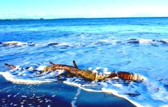 【拡散希望】石垣島に落とし主不明の「デジカメ」が流れ着く